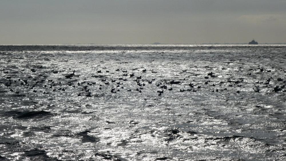Möwen schwimmen in der kalten Ostsee