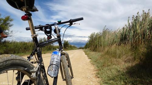Radfahren in der Camargue